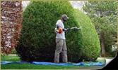amenagement-paysagiste-quebec-taille-hais-et-arbuste