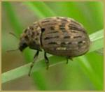 amenagement-paysagiste-quebec-insecte-nuisible